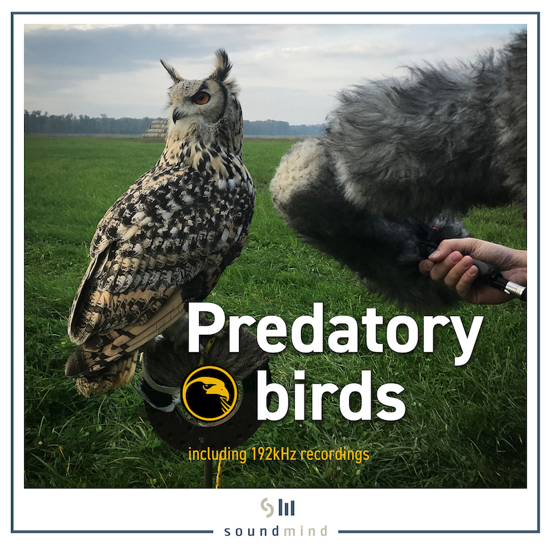 predatory_birds_album web